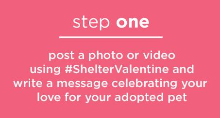 #ShelterValentine