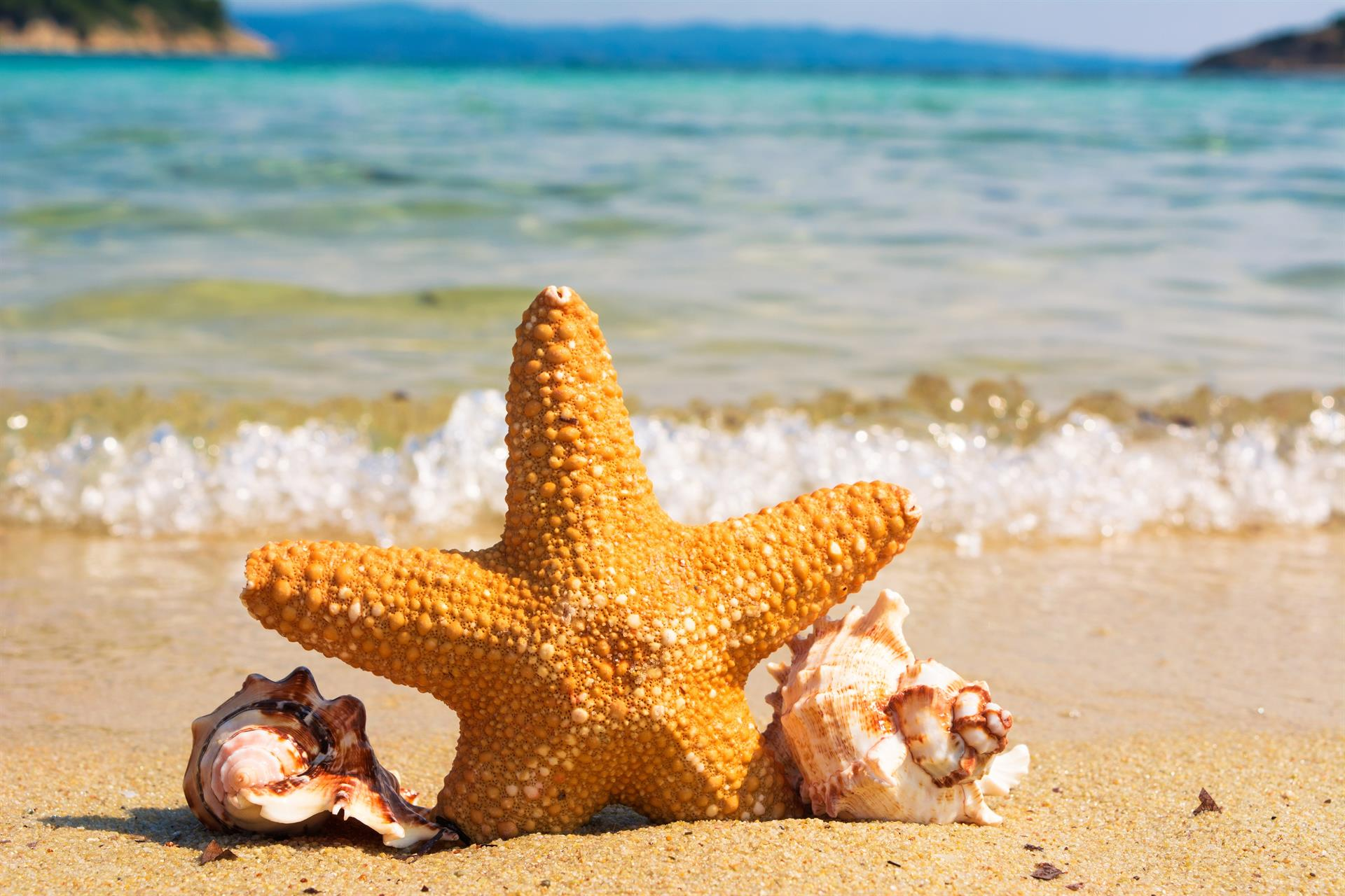 A starfish and some seashells on a beach