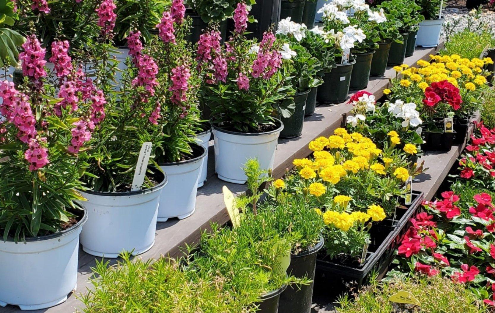 Garden Center Photo