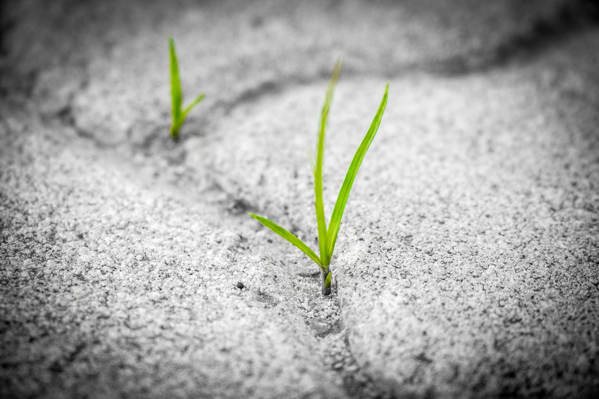 Blades of grass growing out of cracks in a sidewalk - reducing stress and building resilience - Healing Arts Institute
