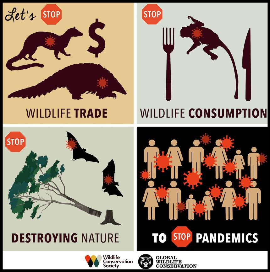 WCS Infographic - Graphic design: Sarah Markes/WCS